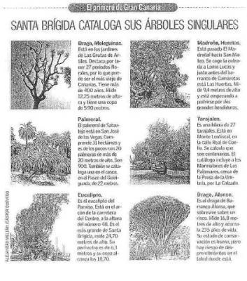 SANTA BRÍGIDA CATALOGA SUS ÁRBOLES SINGULARES